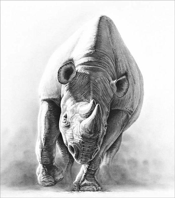 Rhinocéros Gary HODGES Dessin